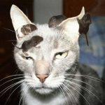 кот с мышами